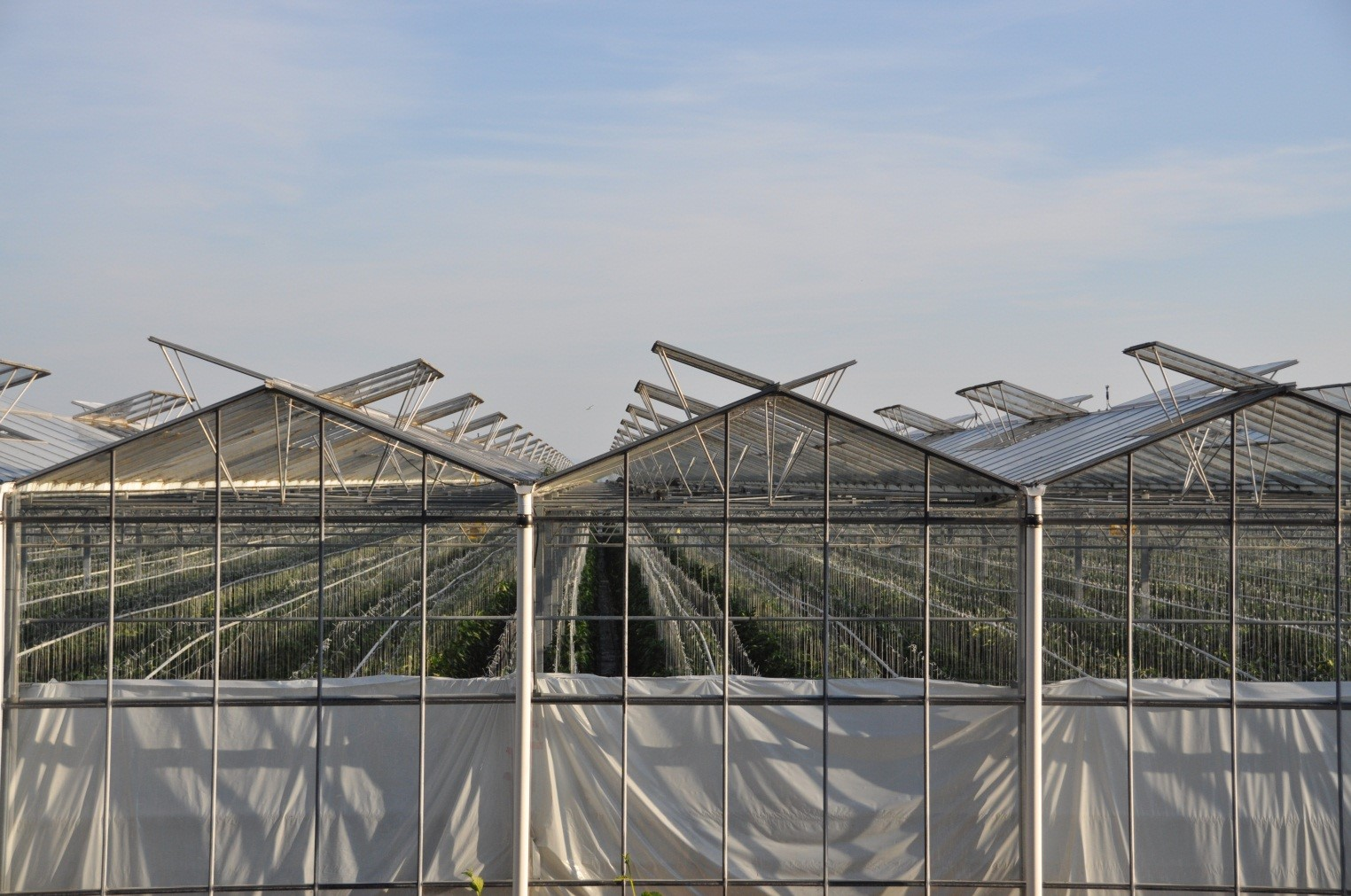 Agricultural Viability Strategy Greenhouse